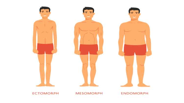 Types de corps humain. Hommes endomorphes, ectomorphes et mésomorphes.